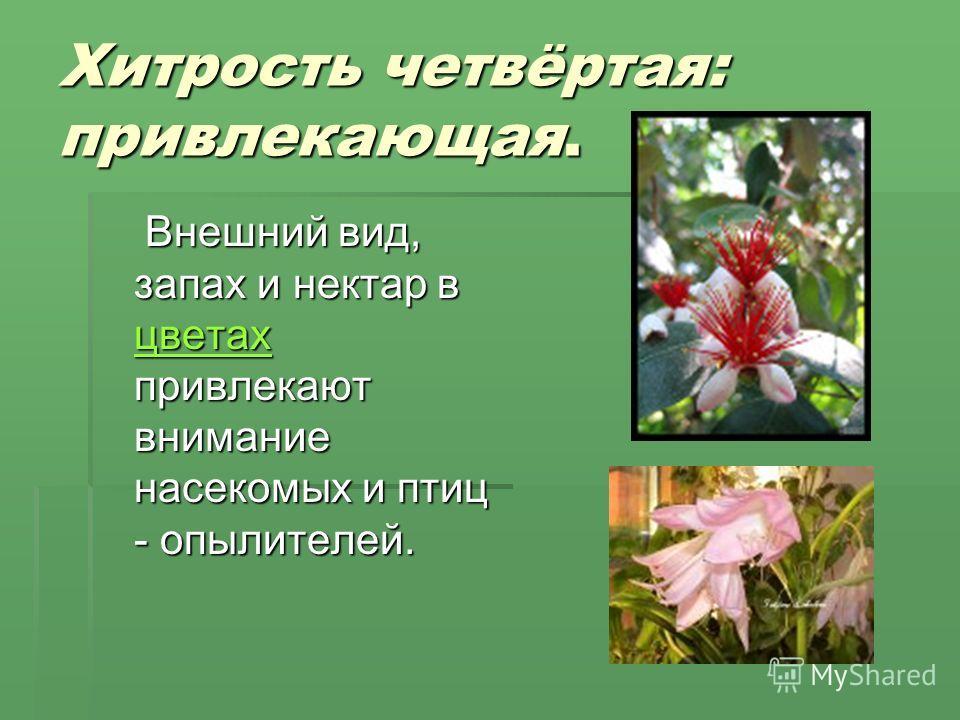 Хитрость четвёртая: привлекающая. Внешний вид, запах и нектар в цветах привлекают внимание насекомых и птиц - опылителей. Внешний вид, запах и нектар в цветах привлекают внимание насекомых и птиц - опылителей. цветах