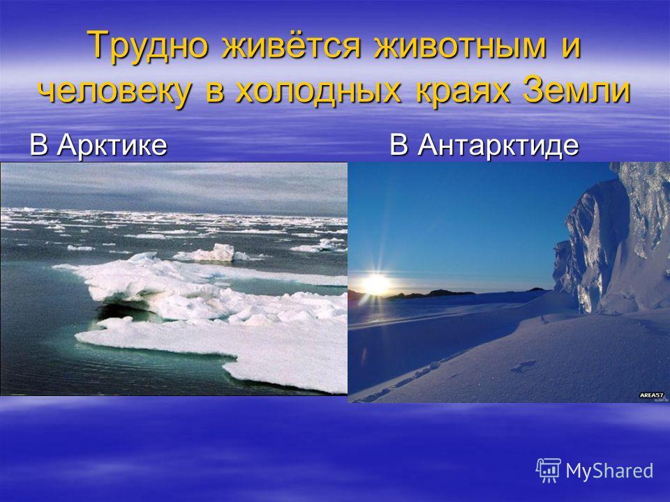 Трудно живётся животным и человеку в холодных краях Земли В Арктике В Антарктиде