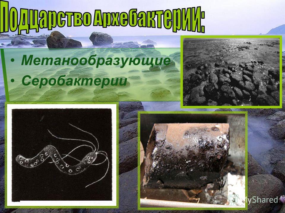 Метанообразующие Серобактерии