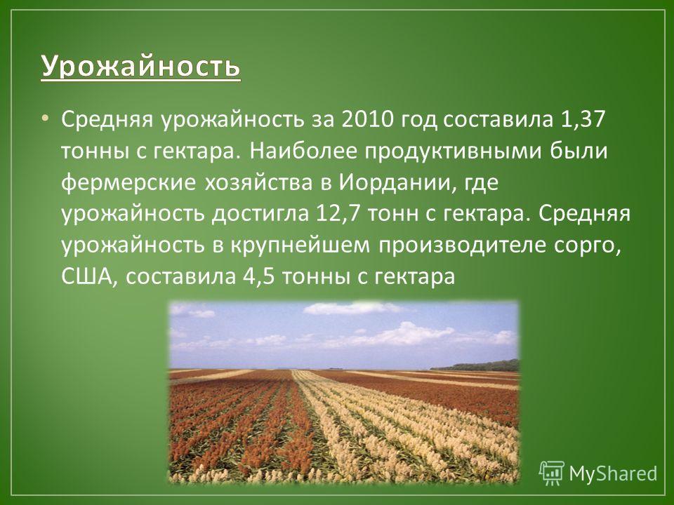 Средняя урожайность за 2010 год составила 1,37 тонны с гектара. Наиболее продуктивными были фермерские хозяйства в Иордании, где урожайность достигла 12,7 тонн с гектара. Средняя урожайность в крупнейшем производителе сорго, США, составила 4,5 тонны