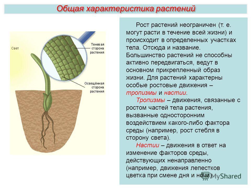 Рост растений неограничен (т. е. могут расти в течение всей жизни) и происходит в определенных участках тела. Отсюда и название. Большинство растений не способны активно передвигаться, ведут в основном прикрепленный образ жизни. Для растений характер