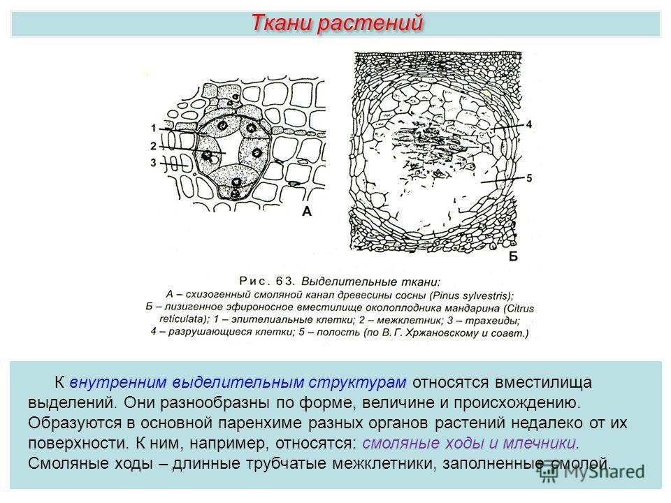Ткани растений К внутренним выделительным структурам относятся вместилища выделений. Они разнообразны по форме, величине и происхождению. Образуются в основной паренхиме разных органов растений недалеко от их поверхности. К ним, например, относятся: