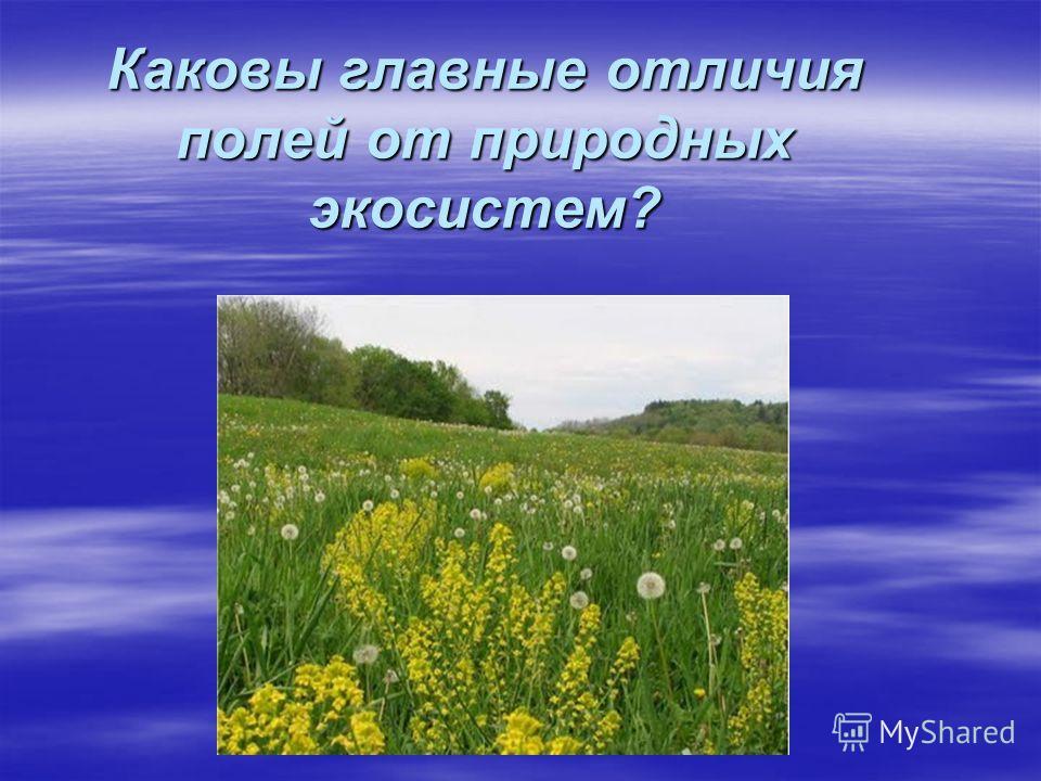 Каковы главные отличия полей от природных экосистем?