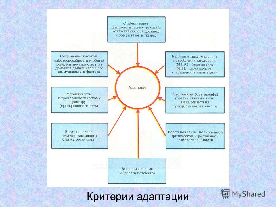 Критерии адаптации