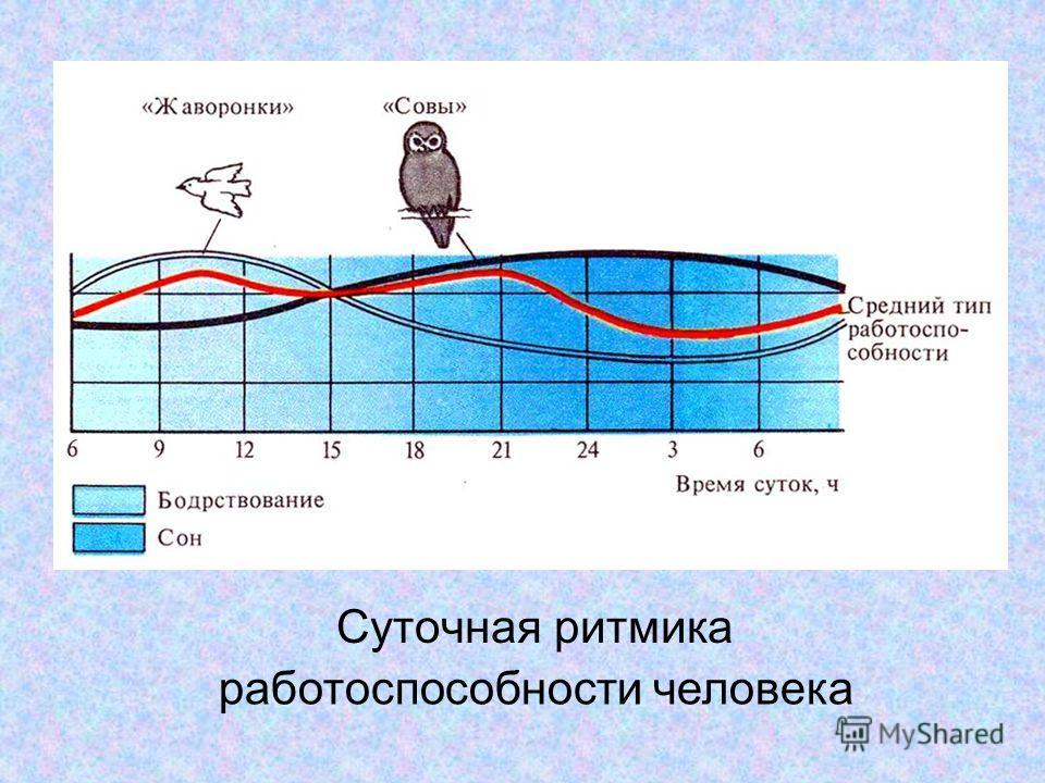 Суточная ритмика работоспособности человека