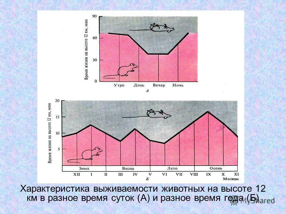 Характеристика выживаемости животных на высоте 12 км в разное время суток (А) и разное время года (Б)