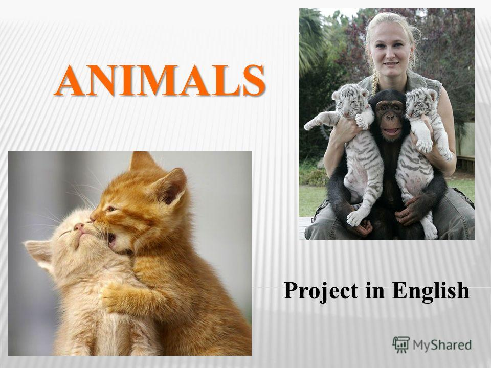 ANIMALS Project in English