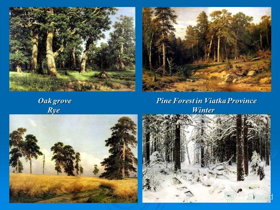 Oak grove Pine Forest in Viatka Province Rye Winter Oak grove Pine Forest in Viatka Province Rye Winter