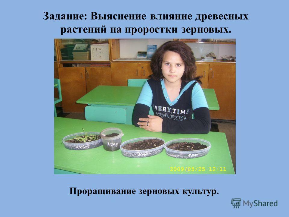 Задание: Выяснение влияние древесных растений на проростки зерновых. Проращивание зерновых культур.