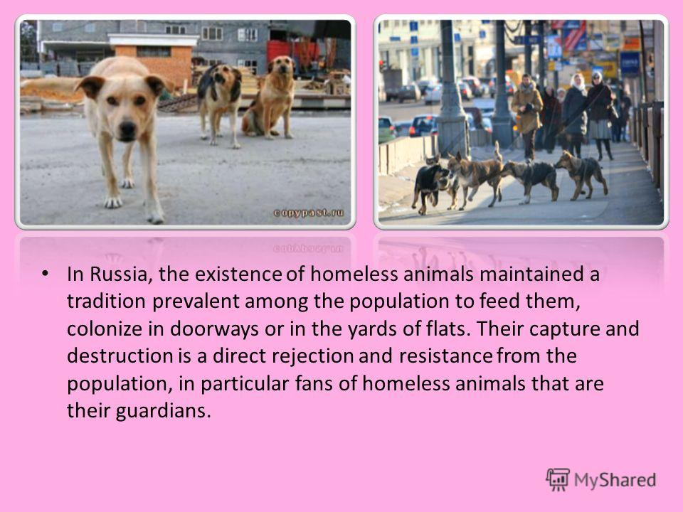 In Russia, the existence of homeless animals maintained a tradition prevalent among the population to feed them, colonize in doorways or in the yards of flats. Their capture and destruction is a direct rejection and resistance from the population, in