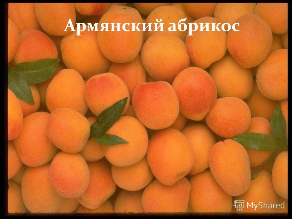 Армянский абрикос