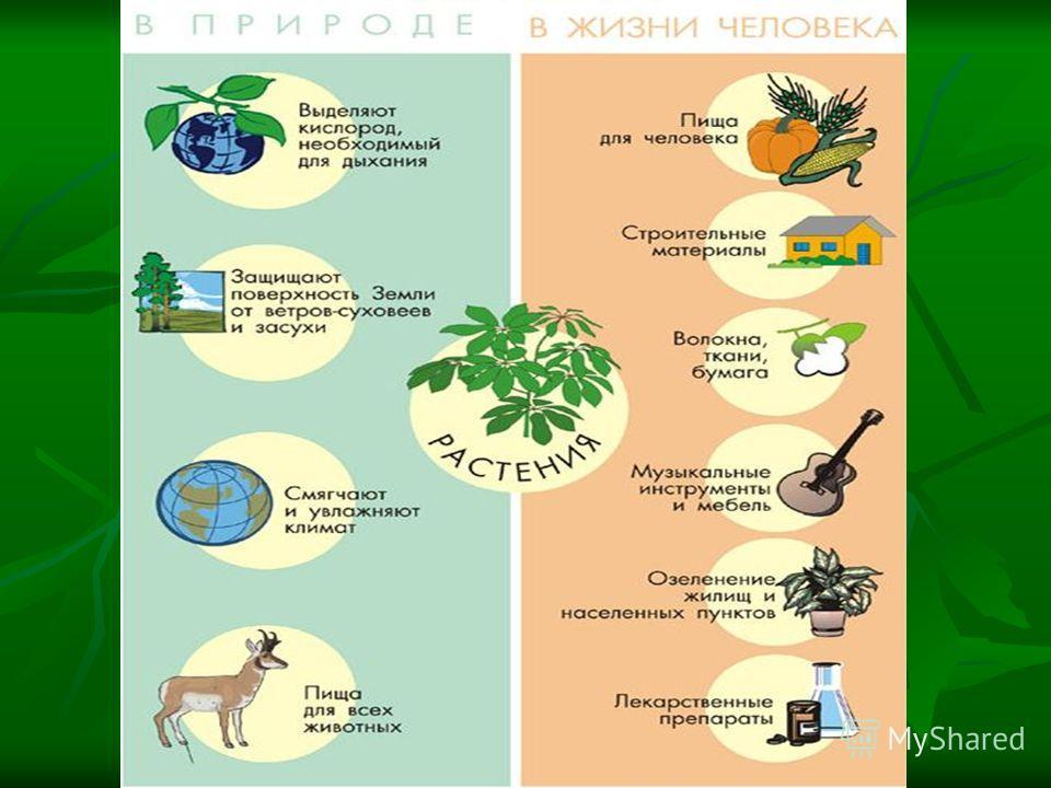 Значение фотосинтеза для жизни на земле