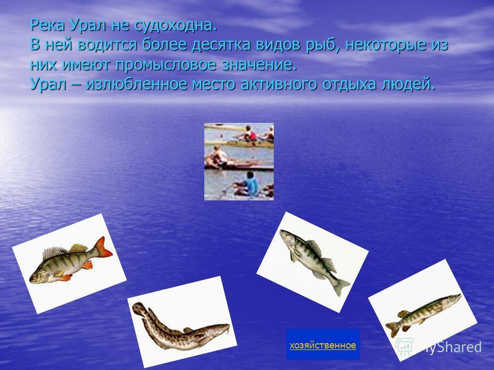 Река Урал не судоходна. В ней водится более десятка видов рыб, некоторые из них имеют промысловое значение. Урал – излюбленное место активного отдыха людей. хозяйственное