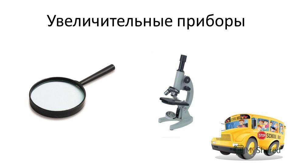 Учитель биологии МБОУ СОШ 20 г.Краснодара Смирнова Светлана Павловна