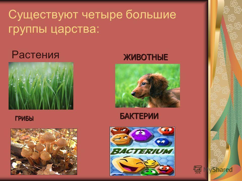 Существуют четыре большие группы царства: Растения ЖИВОТНЫЕ ГРИБЫ БАКТЕРИИ