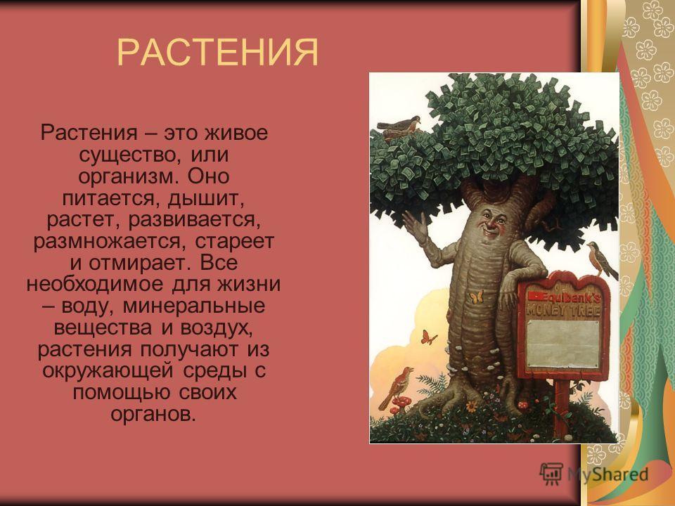 РАСТЕНИЯ Растения – это живое существо, или организм. Оно питается, дышит, растет, развивается, размножается, стареет и отмирает. Все необходимое для жизни – воду, минеральные вещества и воздух, растения получают из окружающей среды с помощью своих о