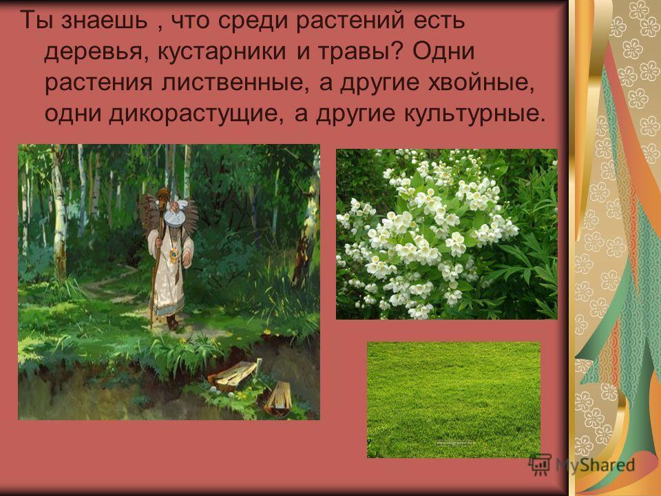 Ты знаешь, что среди растений есть деревья, кустарники и травы? Одни растения лиственные, а другие хвойные, одни дикорастущие, а другие культурные.