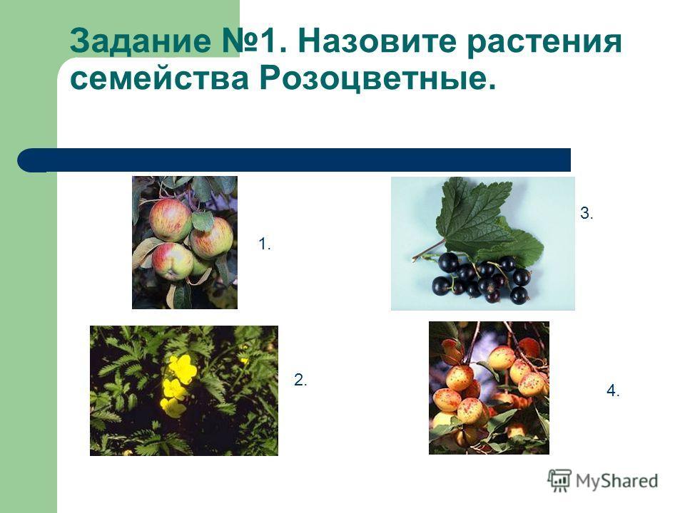 Задание 1. Назовите растения семейства Розоцветные. 1. 2. 3. 4.