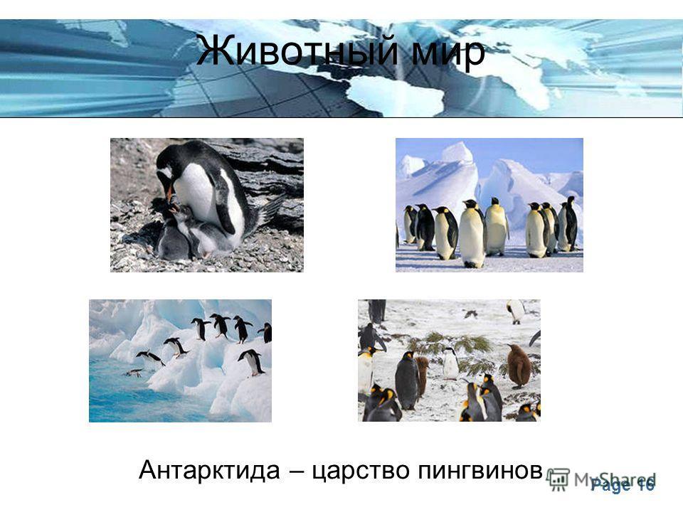 Page 16 Животный мир Антарктида – царство пингвинов