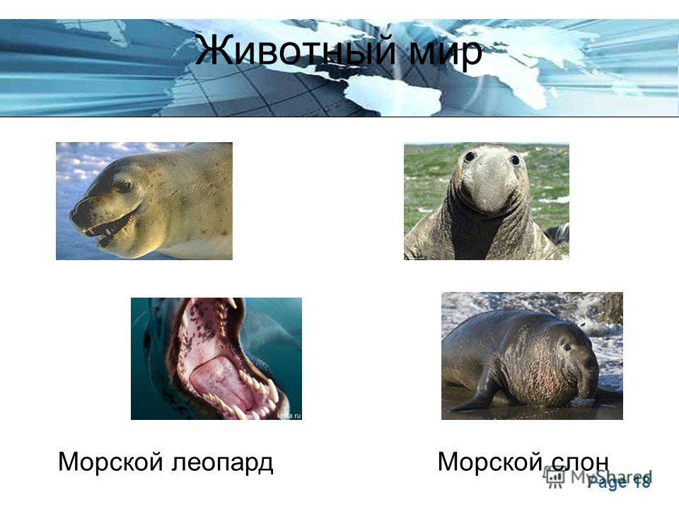 Page 18 Животный мир Морской леопардМорской слон
