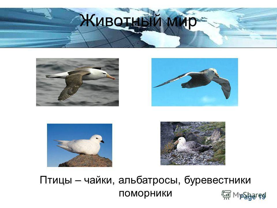 Page 19 Животный мир Птицы – чайки, альбатросы, буревестники поморники