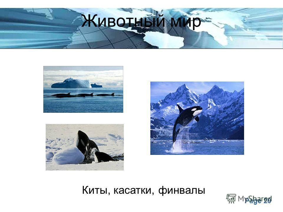 Page 20 Животный мир Киты, касатки, финвалы