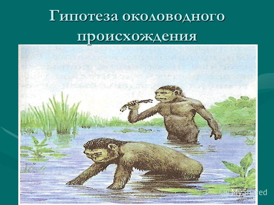 Гипотеза околоводного происхождения