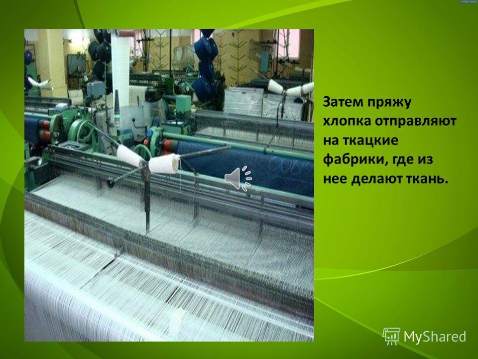 После очистки пресованный хлопок отправляют на прядильные фабрики, где из него делают нитки