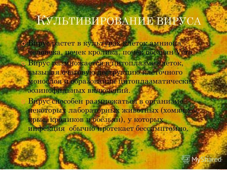 К УЛЬТИВИРОВАНИЕ ВИРУСА Вирус растет в культурах клеток амниона человека, почек кролика, почек обезьян Vero Вирус размножается в цитоплазме клеток, вызывая очаговую деструкцию клеточного монослоя и образования цитоплазматических эозинофильных включен