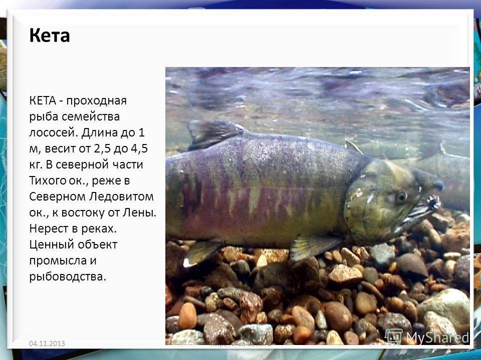 Кета КЕТА - проходная рыба семейства лососей. Длина до 1 м, весит от 2,5 до 4,5 кг. В северной части Тихого ок., реже в Северном Ледовитом ок., к востоку от Лены. Нерест в реках. Ценный объект промысла и рыбоводства. 04.11.2013http://aida.ucoz.ru15