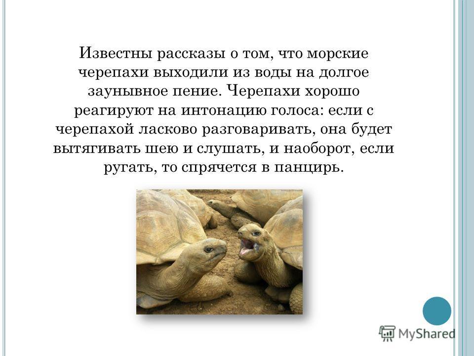 Известны рассказы о том, что морские черепахи выходили из воды на долгое заунывное пение. Черепахи хорошо реагируют на интонацию голоса: если с черепахой ласково разговаривать, она будет вытягивать шею и слушать, и наоборот, если ругать, то спрячется