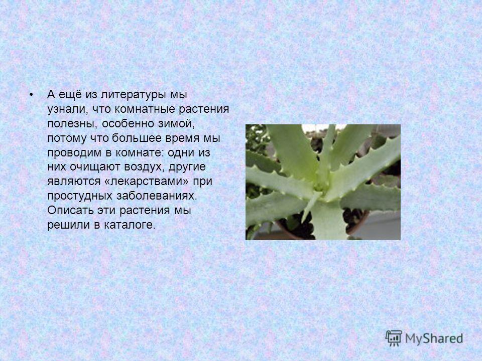 А ещё из литературы мы узнали, что комнатные растения полезны, особенно зимой, потому что большее время мы проводим в комнате: одни из них очищают воздух, другие являются «лекарствами» при простудных заболеваниях. Описать эти растения мы решили в кат