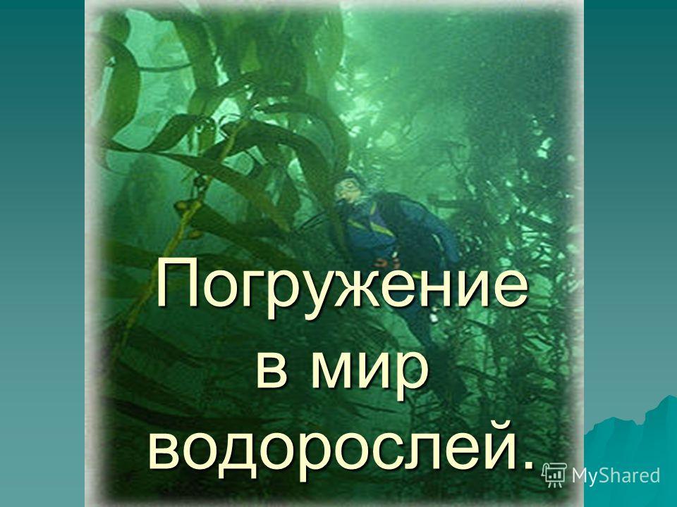 Погружение в мир водорослей.