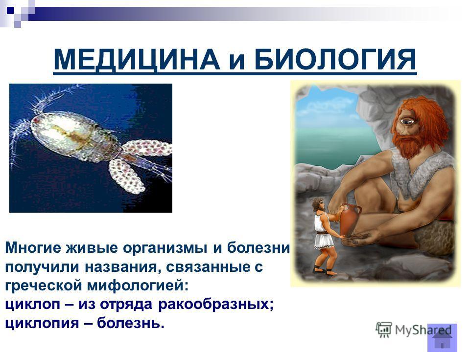 МЕДИЦИНА и БИОЛОГИЯ Многие живые организмы и болезни получили названия, связанные с греческой мифологией: циклоп – из отряда ракообразных; циклопия – болезнь.