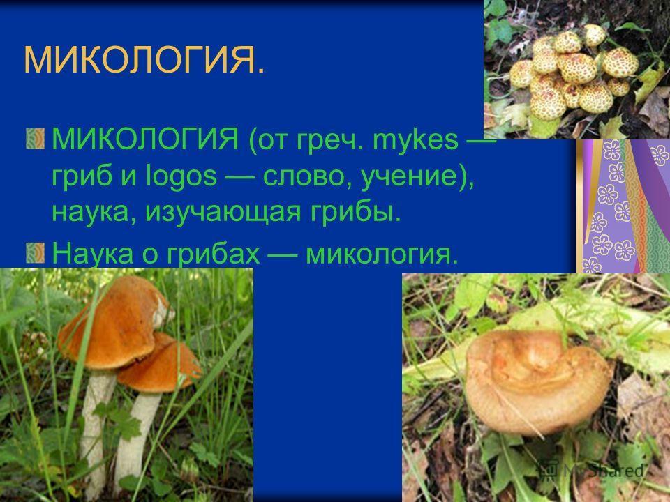 МИКОЛОГИЯ. МИКОЛОГИЯ (от греч. mykes гриб и logos слово, учение), наука, изучающая грибы. Наука о грибах микология.