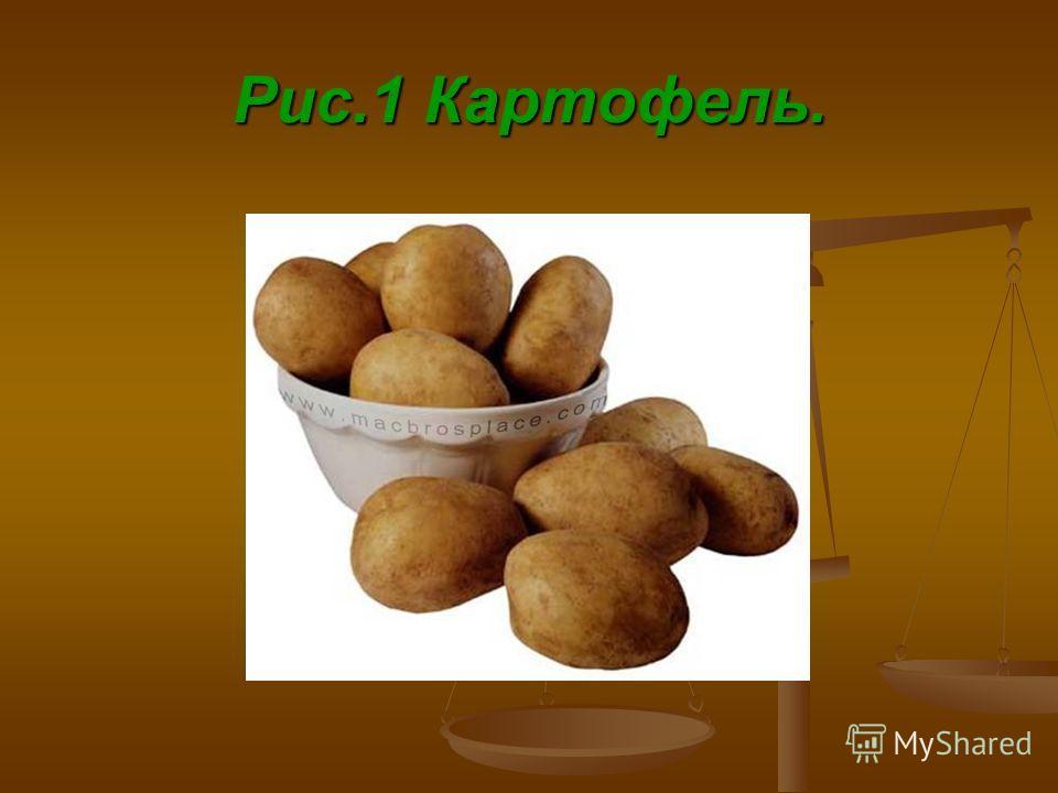 Рис.1 Картофель.
