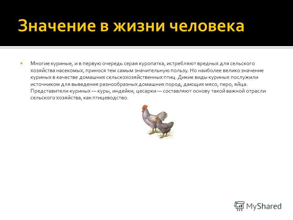 Многие куриные, и в первую очередь серая куропатка, истребляют вредных для сельского хозяйства насекомых, принося тем самым значительную пользу. Но наиболее велико значение куриных в качестве домашних сельскохозяйственных птиц. Дикие виды куриных пос