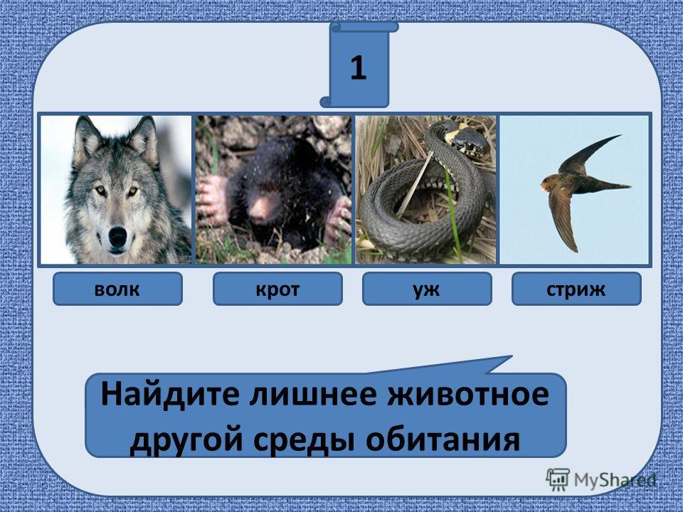 1 Найдите лишнее животное другой среды обитания волккротужстриж