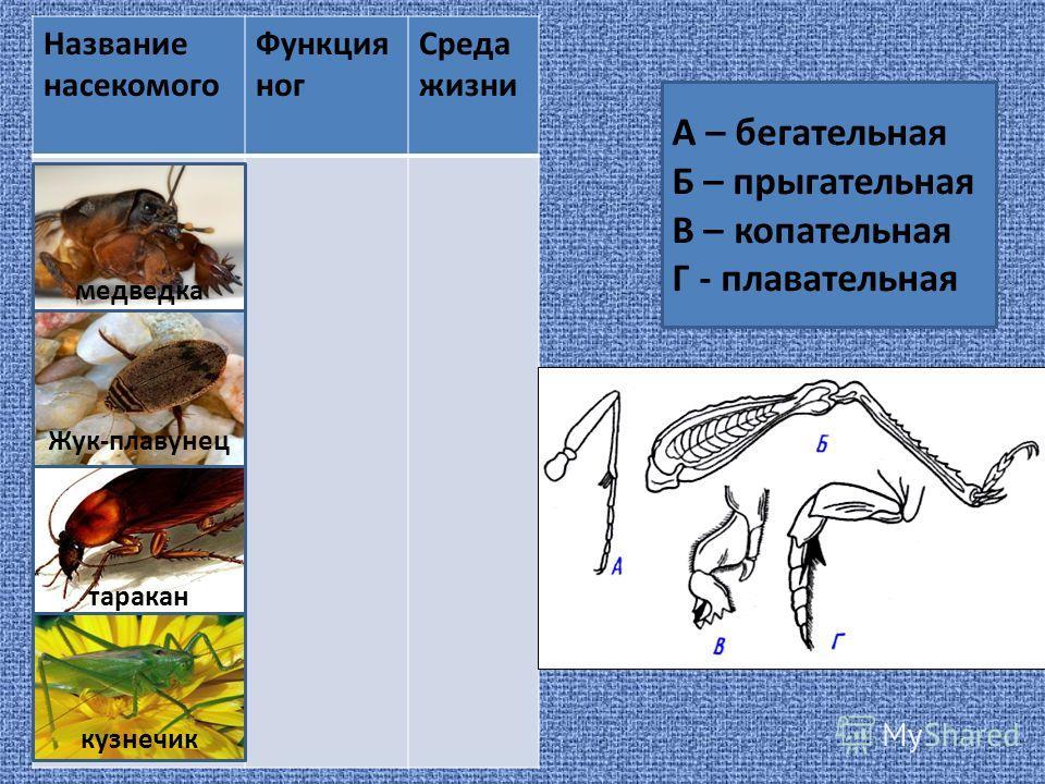Название насекомого Функция ног Среда жизни А – бегательная Б – прыгательная В – копательная Г - плавательная медведка Жук-плавунец таракан кузнечик
