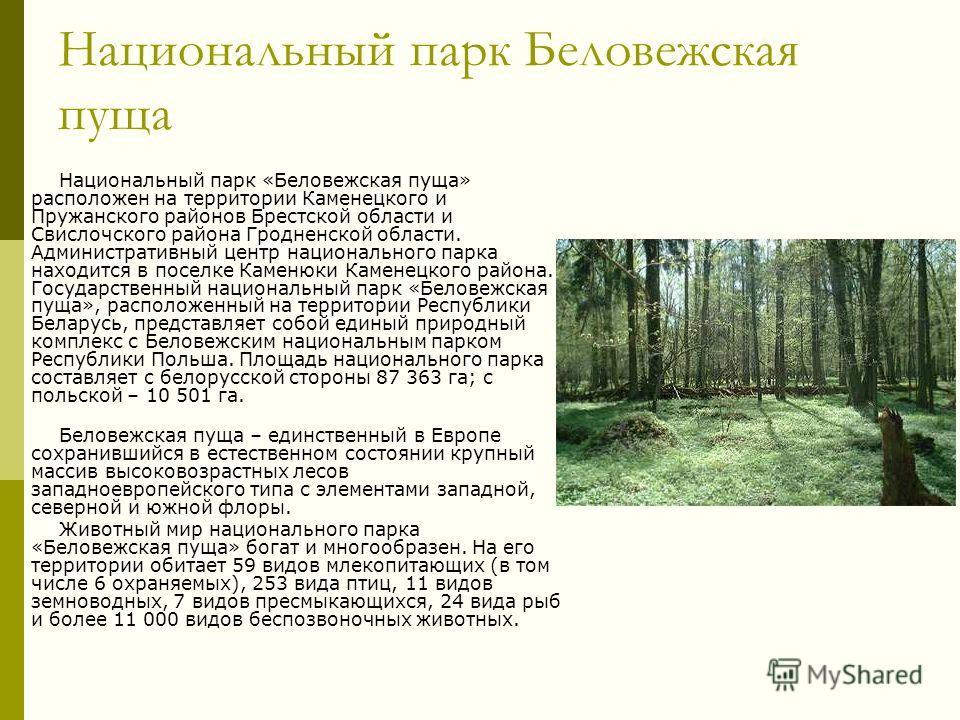 Национальный парк Беловежская пуща Национальный парк «Беловежская пуща» расположен на территории Каменецкого и Пружанского районов Брестской области и Свислочского района Гродненской области. Административный центр национального парка находится в пос