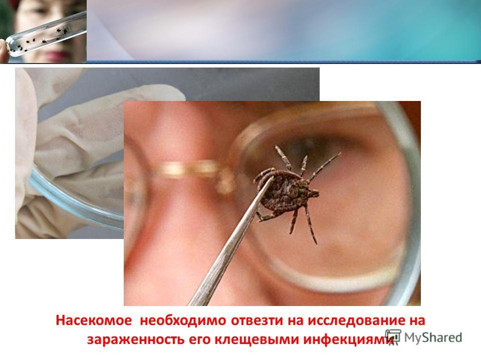 Насекомое необходимо отвезти на исследование на зараженность его клещевыми инфекциями