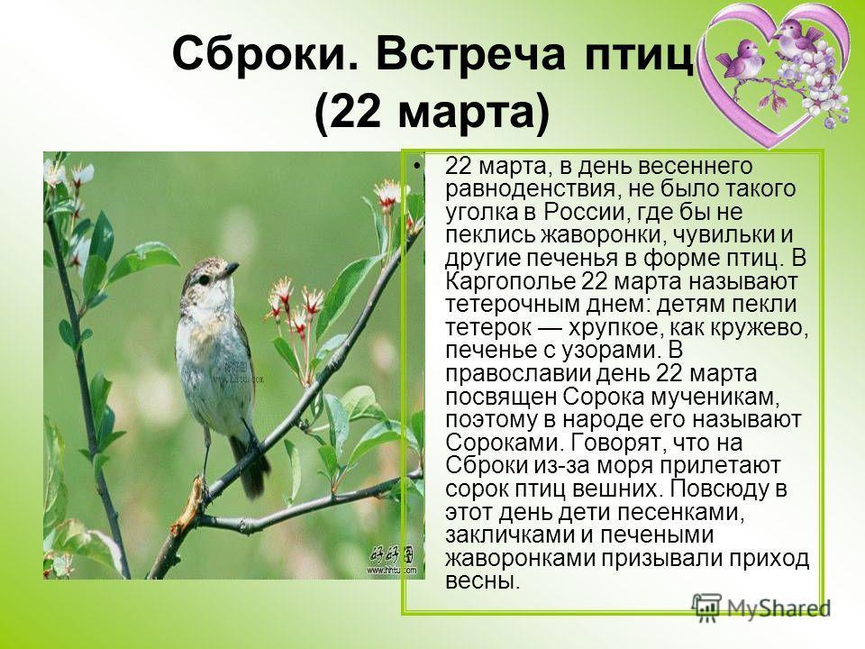 Сброки. Встреча птиц (22 марта) 22 марта, в день весеннего равноденствия, не было такого уголка в России, где бы не пеклись жаворонки, чувильки и другие печенья в форме птиц. В Каргополье 22 марта называют тетерочным днем: детям пекли тетерок хрупкое