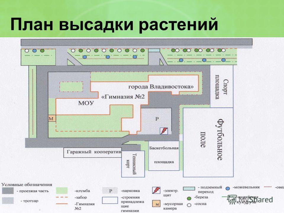 План высадки растений