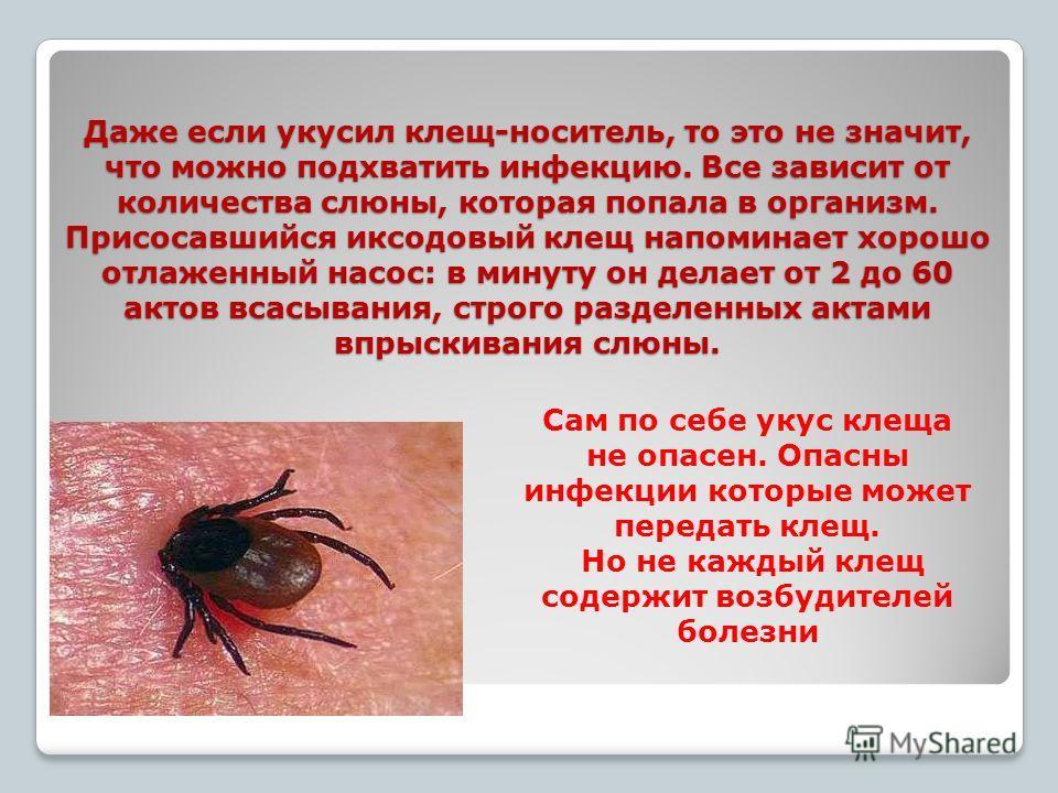 Даже если укусил клещ-носитель, то это не значит, что можно подхватить инфекцию. Все зависит от количества слюны, которая попала в организм. Присосавшийся иксодовый клещ напоминает хорошо отлаженный насос: в минуту он делает от 2 до 60 актов всасыван