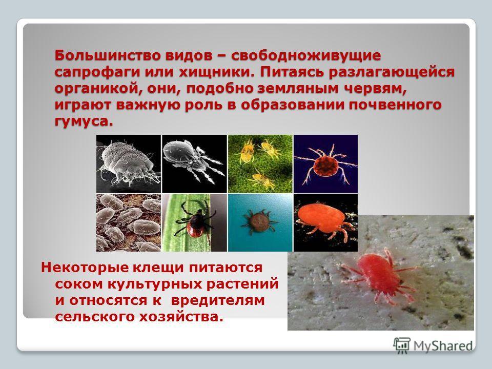 Большинство видов – свободноживущие сапрофаги или хищники. Питаясь разлагающейся органикой, они, подобно земляным червям, играют важную роль в образовании почвенного гумуса. Некоторые клещи питаются соком культурных растений и относятся к вредителям