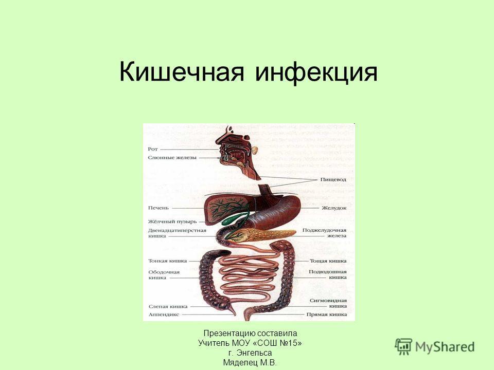 Кишечная инфекция Презентацию составила Учитель МОУ «СОШ 15» г. Энгельса Мяделец М.В.