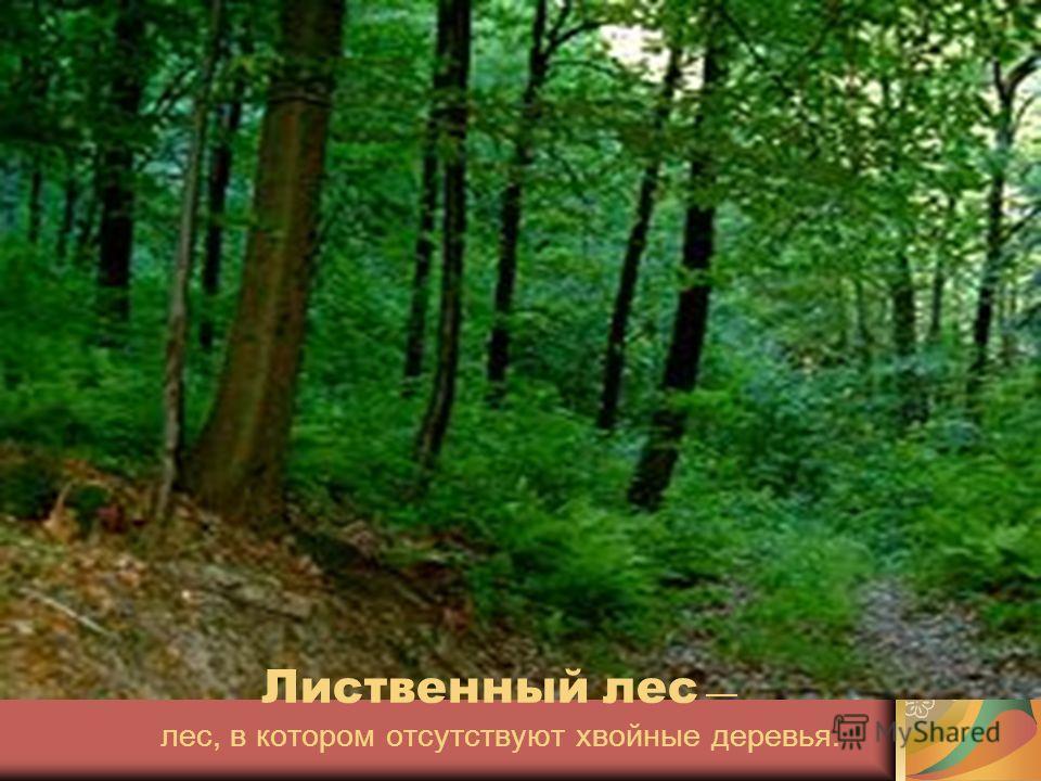 Лиственный лес лес, в котором отсутствуют хвойные деревья.