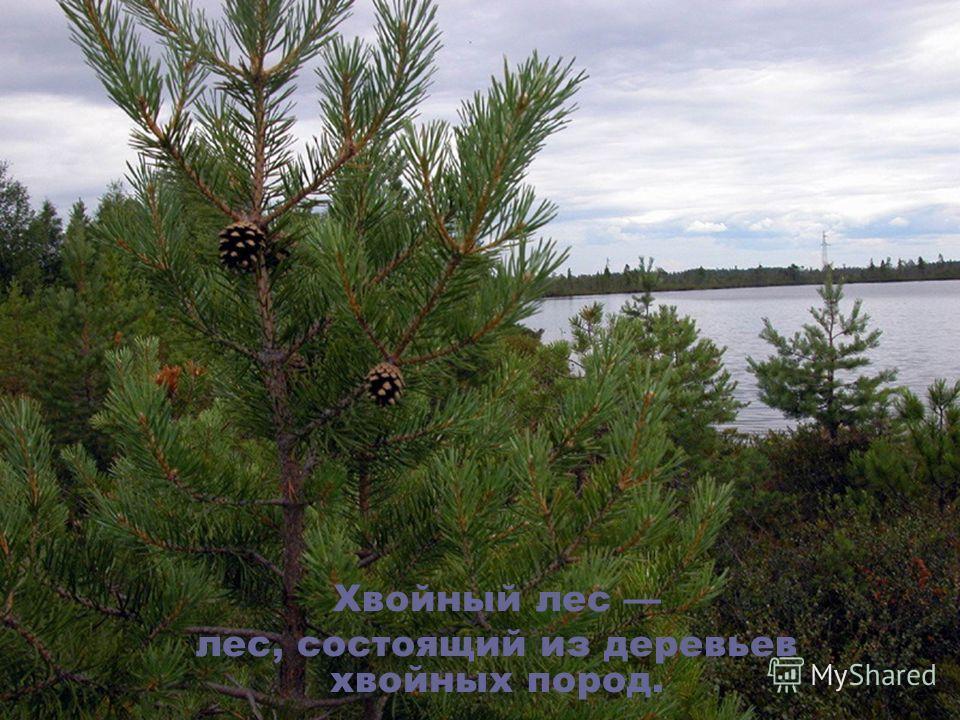 Хвойный лес лес, состоящий из деревьев хвойных пород.