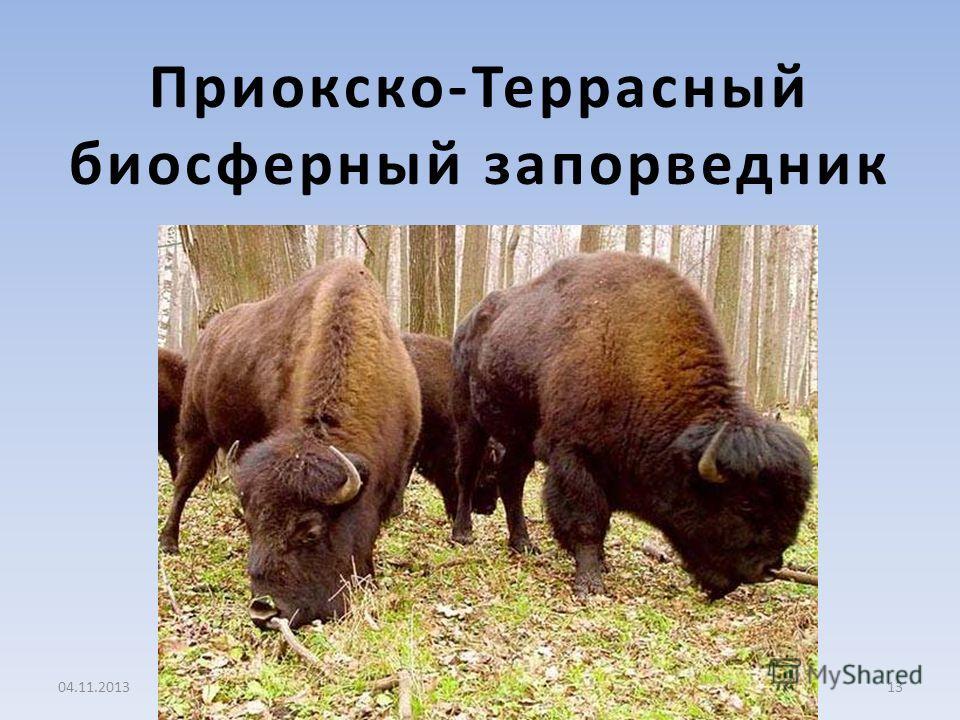 Приокско-Террасный биосферный запорведник 04.11.201313
