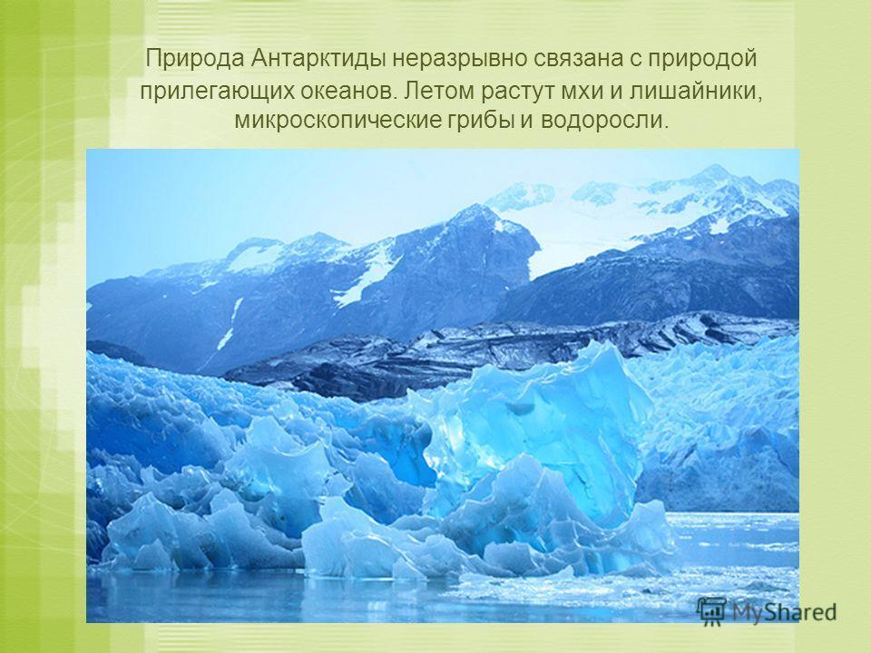 Природа Антарктиды неразрывно связана с природой прилегающих океанов. Летом растут мхи и лишайники, микроскопические грибы и водоросли.